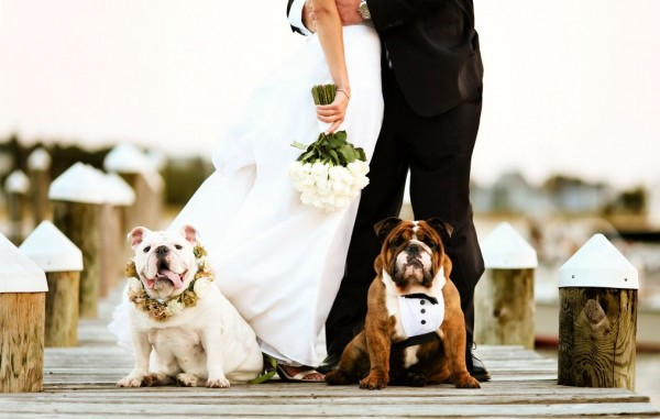 Wedding dog! Ecco la dogsitter per il matrimonio