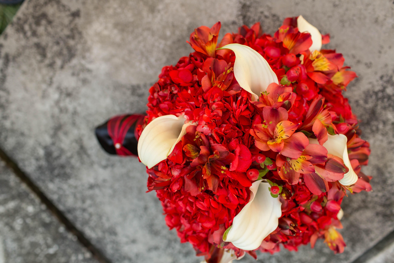 Red alstroemeria, esempio di fiori e dei colori dell'autunno