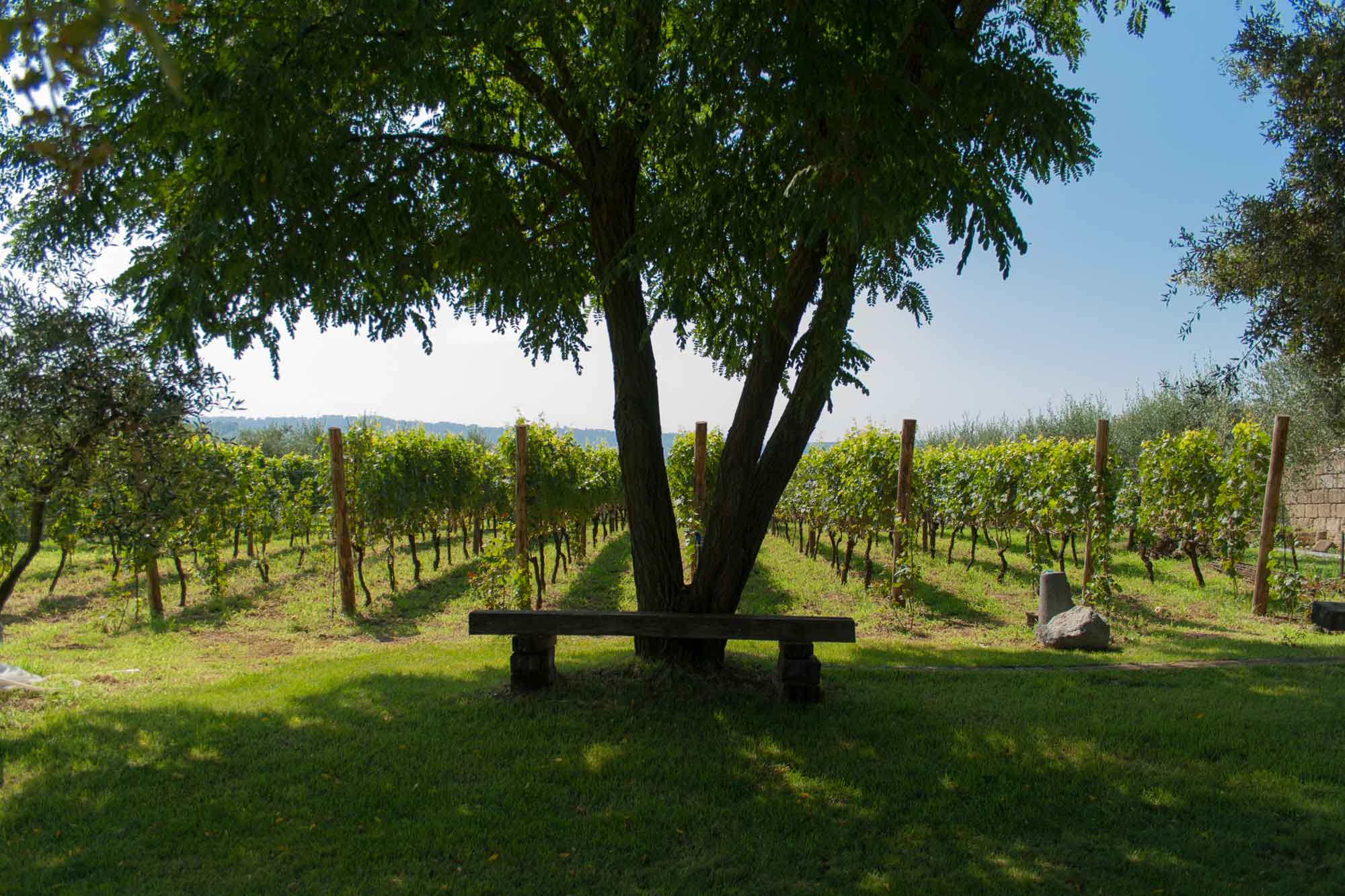movimento turismo del vino partner di tenuta astroni