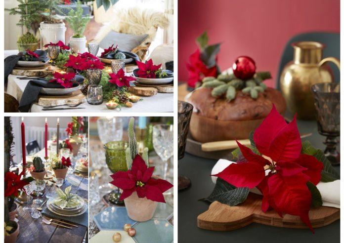 Decorazioni a tavola, con la Stella di Natale