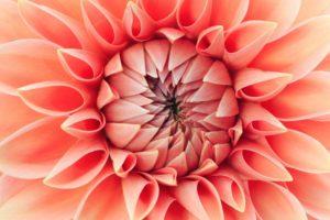 Living Coral - fiori