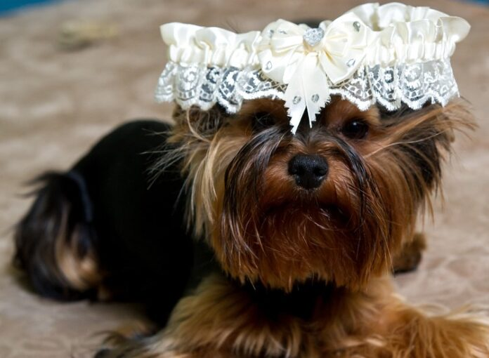 Come organizzare un matrimonio dog friendly